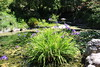 IMG_4552 (cheryl's pix) Tags: california berkeley botanicgarden botanicalgardens botanicalgarden botanicgardens berkeleyca berkeleybotanicalgarden ucbotanicalgarden universityofcaliforniabotanicalgarden universityofcaliforniabotanicalgardenatberkeley
