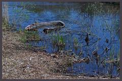 AH62_4068 (der_andyrandy) Tags: grass boot see wasser blau ufer teich tmpel versunkenerkahn