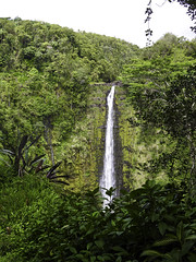 Akaka Falls - Set 2 - 004