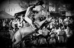 Joo Cardoso (Eduardo Amorim) Tags: brazil horses horse southamerica brasil criollo caballo cheval caballos cavalos pelotas pferde cavalli cavallo cavalo pferd riograndedosul pampa hest hevonen campanha brsil chevaux  amricadosul hst  amriquedusud   sudamrica suramrica amricadelsur  sdamerika crioulo caballoscriollos criollos jineteada   costadoce americadelsud gineteada  crioulos cavalocrioulo americameridionale caballocriollo eduardoamorim cavaloscrioulos