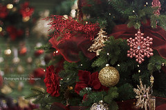 CHRISTMAS TREE (dppdi (2003-2016)) Tags: gordale thewirral cheshire england uk christmastree christmas decorations