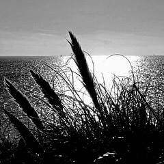 Les Minimes, La Rochelle, France (pom.angers) Tags: panasonicdmctz30 november 2016 lesminimes larochelle 17 charentemaritime nouvelleaquitaine france europeanunion 100