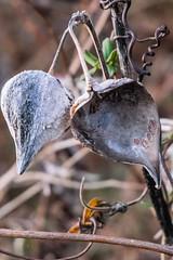 DSCF1983 (Emrys Schoemaker) Tags: pennsylvania welkinweir macro nature
