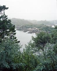 View from Garnish Island (nikolaijan) Tags: plaubelmakina 67 garnishisland kodak portra160nc plaubel 120 film analogue trees islandviews ireland cork rangefinder irishlandscape