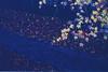 高尾山_4 (Taiwan's Riccardo) Tags: 2016 japan tokyo 135film fujifilmrdpiii transparency color plustek8200i rangefinder 日本 東京 zeissikoncontessa35 tessar fixed 45mmf28 高尾山 八王子 2016tokyovacation