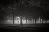 Winter Mornings (singulartalent) Tags: claphamcommon trees avenue london markhigham blackandwhite mono fog mist winter runner