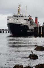 A Grey Heron watches on as MV Hebridean Isles moors at Brodick Pier (Russardo) Tags: calmac cal mac clyde scotland caledonian macbrayne mv hebridean isles