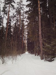 В лесах спрятана масса тропинок.