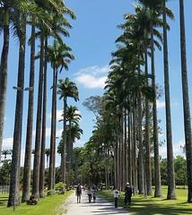 Peace (elianek) Tags: park nauture green parquedacidade parque natureza verde coqueiros palm trees palmtrees paz peace brazil brasil saopaulo saojosedoscampos