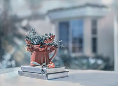 Sunday Morning...I love the morning without an alarm. (z_a_r_a) Tags: still life berries house outdoor light shade crisp morning book books dof window sun d750 nikon f14 50mm sigma 52 2017