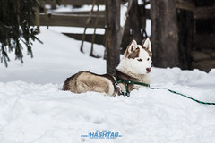 dogsled2017-12