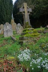 Churchyard @ Sundridge Kent (Adam Swaine) Tags: gravestones graveyard churchyard church cross snowdrops flowers flora winter wildflowers swaine canon england english britain british naturelovers nature counties countryside ukcounties kent