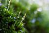 DSC_9462 (xav_roberts) Tags: macro closeup dew nikonv1 nikonft1 nikon sigma105mmf28mm water droplets morningdew rain raindrops