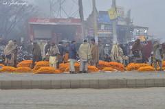 Phool Mandi (Ashbel Sultan 26) Tags: flower market sighiyan fog phool lahore pakistan winter photography