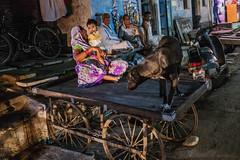 El perro negro (Nebelkuss) Tags: india gwalior perros dogs callejeras street colores colours carro trolley nocturno night fujixpro1 fujinonxf23f14 elzoohumano thehumanzoo quierosercomostevemccurry iwannabelikestevemccurry