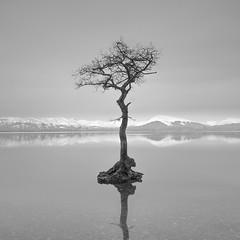 The Tree (Nick green2012) Tags: lone tree loch lomond scotland longexposure