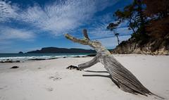 tales of adventure (Keith Midson) Tags: adventurebay brunyisland bruny tree beach coast coastline tasmania sky summer water shore shoreline