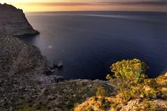 Last evening light (EXPLORE) (Zearil) Tags: d7100 nikon light pine seascape sea sunset island sun luz pino paisaje mar atardecer sol isla mallorca