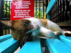 Just leave me your business card before you depart! (kenyai) Tags: 15fav topv111 1025fav cat bench asia malaysia top20catpix southeast malesia gatto businesscard panchina bigliettodavisita interestingness65 i500
