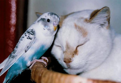 Love Unknown (Zulpha) Tags: bird cat canon basket friendship sleep tiger budgie rest top20catpix unusual i500 interestingness307 explore29jan06 ccc16 tccomp051
