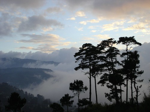 Baguio nature view