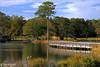 Lone Pine (Tommy Simms) Tags: travel bridge lake art 20d nature water georgia footbridge canon20d canoneos20d lonepine canoneos callawaygardens tommysimms georgiaoutdoors 8157 favoritegarden copyrightwwwtommysimmscom