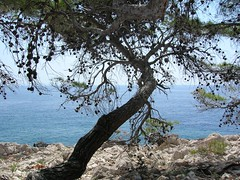 Aleppo pine (n@sy) Tags: plaza sea summer panorama holiday water pine strand geotagged island mare estate croatia ile playa geotag plage isla croazia nesi vacanza hvar adriatic nasi isola otok dalmatia dalmacija dalmazia nesy lesina nasy nsy nasy70