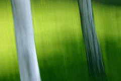 silver birch ii (Adam Clutterbuck) Tags: uk greatbritain abstract blur green forest silver woods 300d gb birch pan sweep canoneos300d oe icm pans panned greengage verticalpan adamclutterbuck intentionalcameramovement showinrecentset openedition