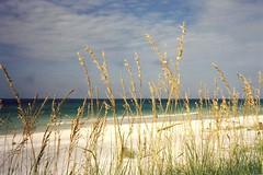 Panama City Beach, Florida (avaloncm) Tags: ocean city sea vacation beach water ilovenature florida 123 321 panama oats iwant5 panamacity seaoats 1on1 notpicked scoreme 100points 57points