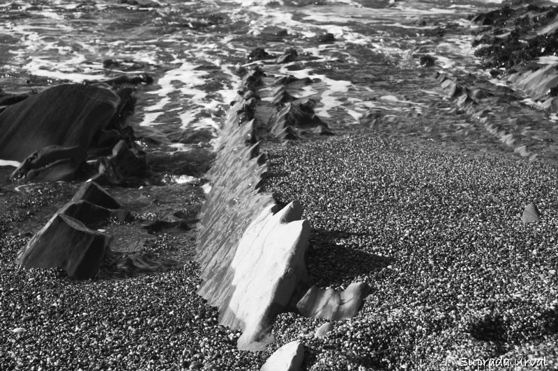 Shark Teeth Rocks