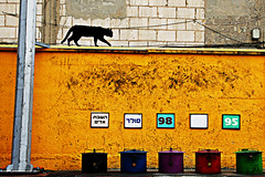 The Gas Station Circus (YanivG) Tags: blue red black color green texture yellow wall cat israel telaviv purple moo  fuel phototrip  withtalbright gasyoumeanpetrolsurely 500px