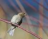 Bird, Washington, DC Feb. 26 (ozoni11) Tags: tree bird nature birds dc bokeh wildlife ornithology 85points interestingness368 i500 specanimal bokehsonicejuly bokehsonicejuly09