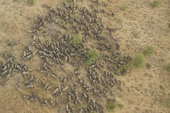 Zakouma elephant herd (Mike Fay) Tags: africa elephants migration herd sahel poaching tchad