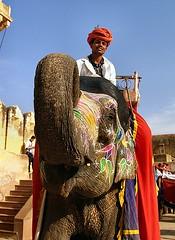 P1010314-1 (Sam's Exotic Travels) Tags: city pink india elephant sam jaipur province sams rajasthan mughal travelphotos samsays samsexotictravelphotos exotictravelphotos samsayscom