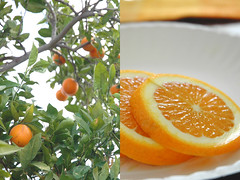 My heaven would have an orange tree - by churl