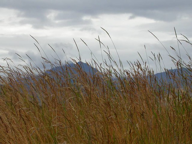 Grass & mountains