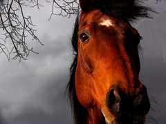 Storm approaching (Dan65) Tags: sky horse storm grey bay bravo head 5 quality been1of100 gray explore top20horsepix top20hallfame topf150 thoroughbred karakum magicdonkey 1500v60f specanimal fivestarsgallery impressedbeauty