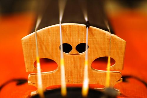 bridge of violin