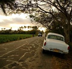 (Vina the Great) Tags: road sunset tree car truck palms cuba cropped tobacco viñales