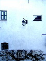 trimmed hedge (Maerten Prins) Tags: window wall nijmegen hedge lantern