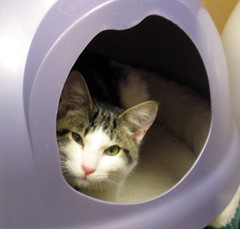 A Cat Picture Taken Through a Hole (Pixel Packing Mama) Tags: cats 510fav picturesthroughholes adorable whiskers sofa mycats catsandkittensset catscatscats ilovemycat furryfriday capture nuggets cutecat allanimals cutekitten opi exclamationpoints catlovers heartlandhumanesociety femalephotographers v1000 petparade notmycat beautifulcats familyfurrythingsorboth pixelpackingmama meowscollector catssmalltobig dorothydelinaporter worldsfavorite everybodywantstobeacat notmypet cc1400 reallyunlimited favoritedpixset mostinterestingaccordingtoflickralgorithmset cat1400 exclamationpointspool pixwithexclamationpointsincommentsset cats760viewscatswellontheirwayto1000viewsormorepool reallyunlimitedpool cats views1250pool views1000pool purpleset views1000andupdomesticcatsonlypool views12501500pool catcatscatzpool allcatsallowedpool awwwed~cuteadorablephotospool uploadedfirsthalfof2006set exclamationpointsincommentsset catsarecoolpool catsrulersoftheworldcatsrockpool catsaremyfriendsfriendofthemonthvoteseptemberpool watchfor1500 pixelpackingmama~prayforkyronhorman oversixmillionaggregateviews over430000photostreamviews