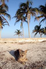 quoi prendre en vacances avec son chat