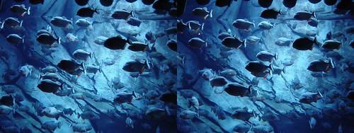 Piranhas B