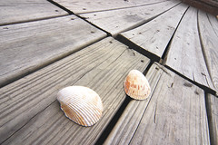 Shells on the Boardwalk (Mormegil) Tags: ocean wood sea shells beach seashells pier walk board warped shore boardwalk clams plank mollusk bivalve