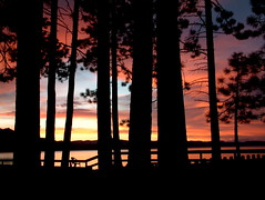 Sunset in the Pines (TahoeSunsets) Tags: california blue trees sunset orange lake silhouette pine fence geotagged tahoe laketahoe explore idyll pinetrees lakefront cotcmostinteresting geo:tool=yuancc may152006 geo:lat=38944637 geo:lon=119980938 fcsetsrises abigfave tahoesunsets ronaparker raparker newtzilla