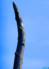 CenturyStalk (mcshots) Tags: usa california socal losangelescounty topanga coast beach succulents centuryplant stalk plants growth nature travel sky blue stock mcshots