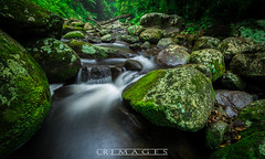 Elabana Stream (C.R Images) Tags: waterfall fall water stream rock moss nature walk bush long exposure log tree fern lightroom vibrant colourfull color smooth sharp landscape elabana outdoor