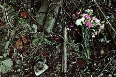 incarnation (helveticaneue) Tags: december 2005 philadelphia ortliebs abandoned brewery nolibs flowers nosegay pink trepass