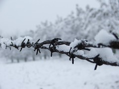 Snow Wire