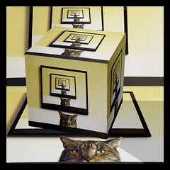 Escher Mingus (Mr Bultitude) Tags: cats cat photoshop square manipulation cube escher mingus repitition mypersonalfavourite mrbultitude manipulatethis neilcarey